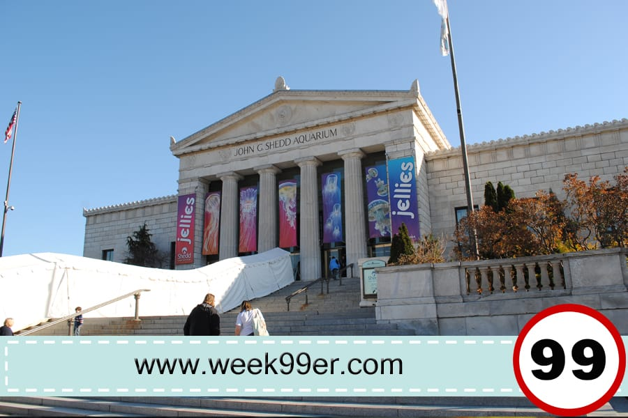 shedd aquarium review
