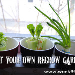 Start your Own Re-Grow Garden!