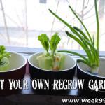 Start your Own Re-Grow Garden!