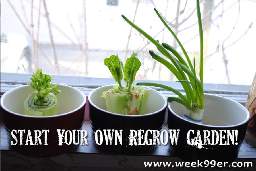 How to regrow food