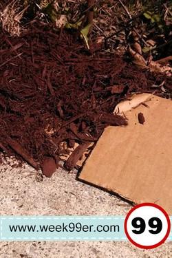 cardboard weed barrier