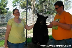 Petting a Baby Bear
