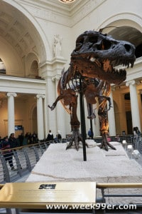 An Afternoon with Sue – Visiting the Field Museum