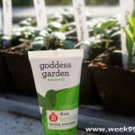 We're Enjoying the Sun Safely! #goddessgarden