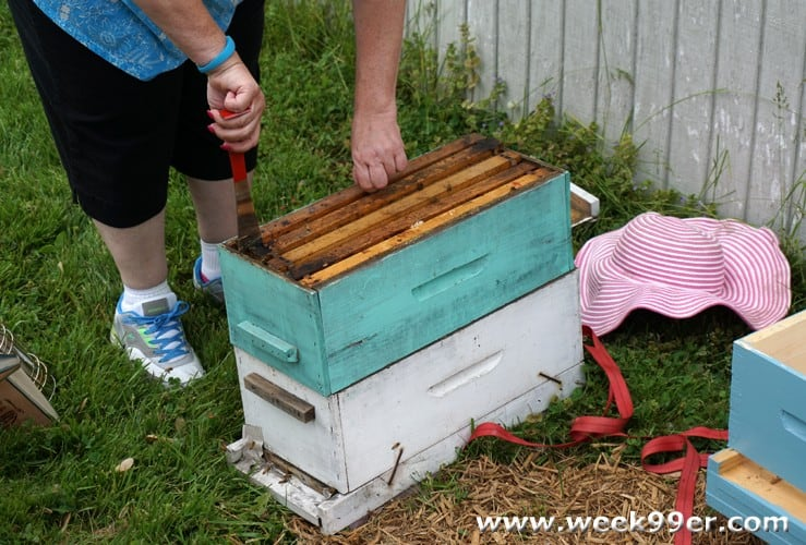 urban bee keeping
