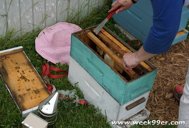 urban bee keeping