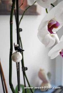 botanistix review