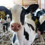 The Story of Michigan Dairy #Milkmeansmorekzoo
