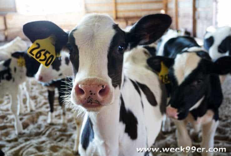 Michigan Dairy Tour