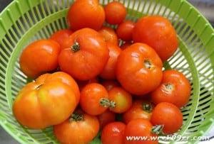 slow cooker tomato soup recipe