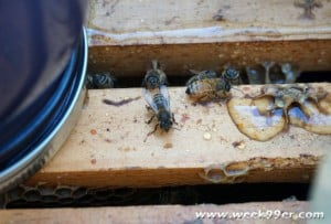 Preparing Our Bees for Fall Weather