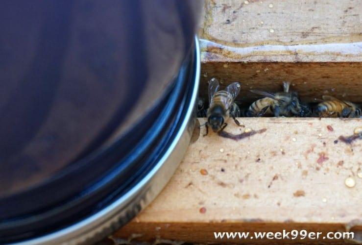 fall bee hive preparation