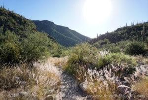 Canyon Ranch Tuscon (21)
