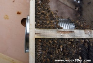 installing a bee hive