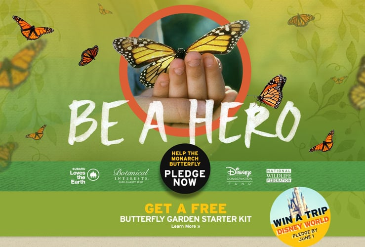 free butterfly garden kit