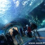 The World's Largest Penguin Conservation Center Opens at the Detroit Zoo!