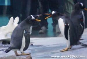polk penguin conservation center review