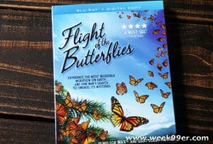 Watch the Wonder of Migration in the Flight of the Butterflies