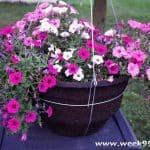 Proven Winners DIY Hanging Basket Kit + Giveaway #ProvenWinners #gardening #ProvenWinnersDIY