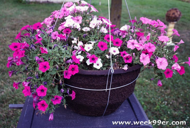 proven winners diy hanging basket review