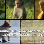 Disneynature's Growing Up Wild is Coming to Digital HD