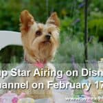 Pup Star Set to Air on Disney Channel this Month! #Pupstarmovie @airbud