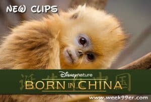 Brand New Born in China Clips You're Going to Love #borninchina