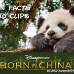 Fun Facts about Pandas and More from Born in China! #BornInChina
