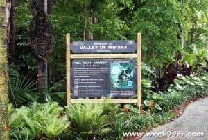 Pandora World of Avatar Walt Disney World Review