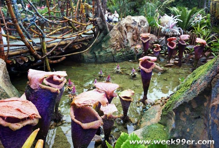 visit another world when you go to pandora at animal kingdom  visitpandora