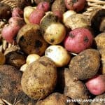 How To Set Up Your Own Potato Growing Bin
