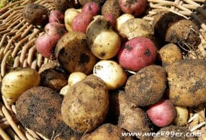 How To Set Up Your Own Potato Growing Bin #Gardening #diy