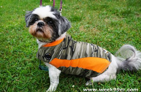 Get Your Furry Friend What They Need To Stay Safe from ThunderShirt
