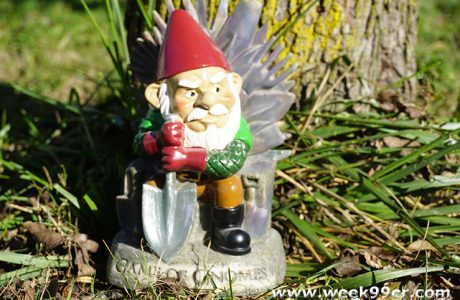 Watch the Drama Unfold with Game of Gnomes