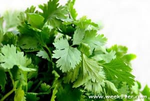 Growing Cilantro for the Garden and Your Recipes