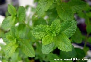 mint uses
