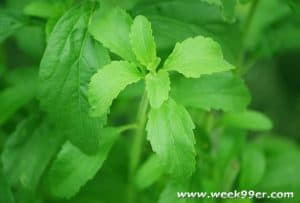 The Benefits of Growing Stevia in Your Garden