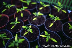 How to Grow You Tomatoes from Seed and When To Start Them