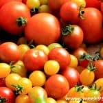 Choosing the Right Type of Tomatoes for Your Container Garden