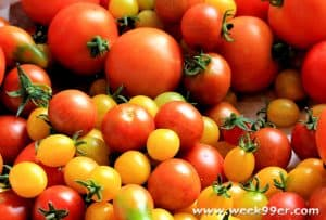 tomatoes for container gardens