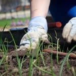 Getting Your Garden In Ship Shape For Spring