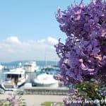 Mackinac Island's Lilac Festival Highlights the Beauty of the Island with Small Town Flair #ThisIsMackinac #MakeItMackinac #PureMichigan #MackinacIsland