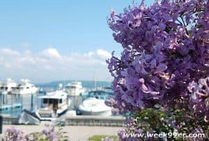 Mackinac Island's Lilac Festival Highlights the Beauty of the Island with Small Town Flair #ThisIsMackinac #MakeItMackinac #PureMichigan #MackinacIsland