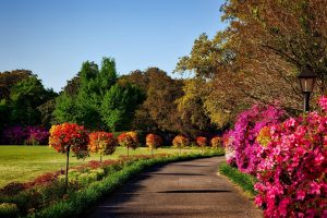 Elements That Make Any Garden Outstanding