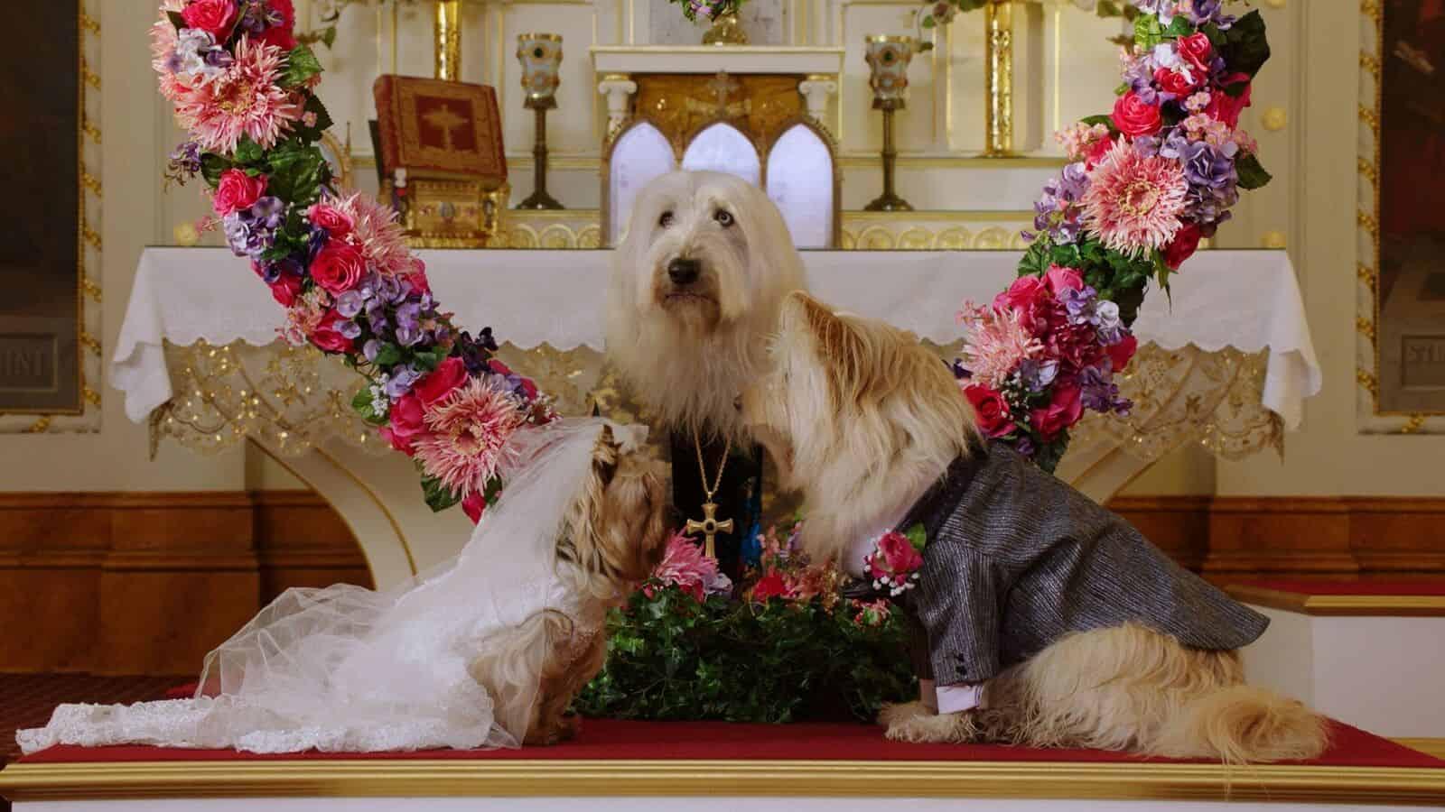 Puppy Star Christmas Announcement Week 99er