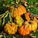 Garden Greatness For Fall And Winter: You Don't Have To Stay Indoors
