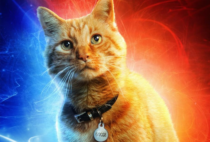 Captain Marvel Cat Explained