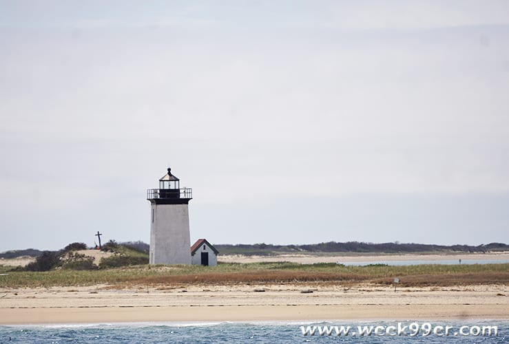 whale watching cape cod review