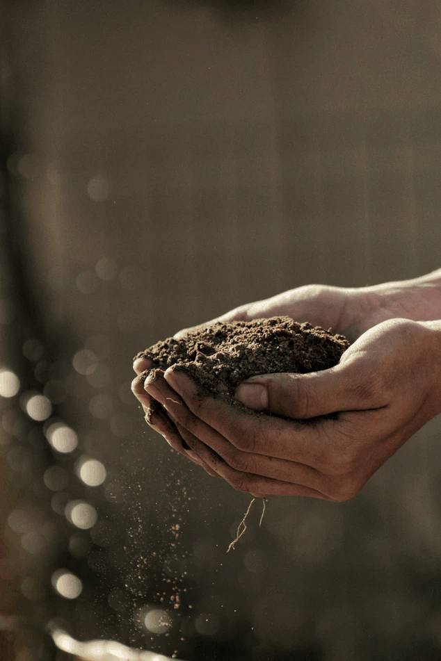 How to Take Care of Your Garden in Extreme Heat