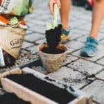 Plants for Your Shade Container Gardens